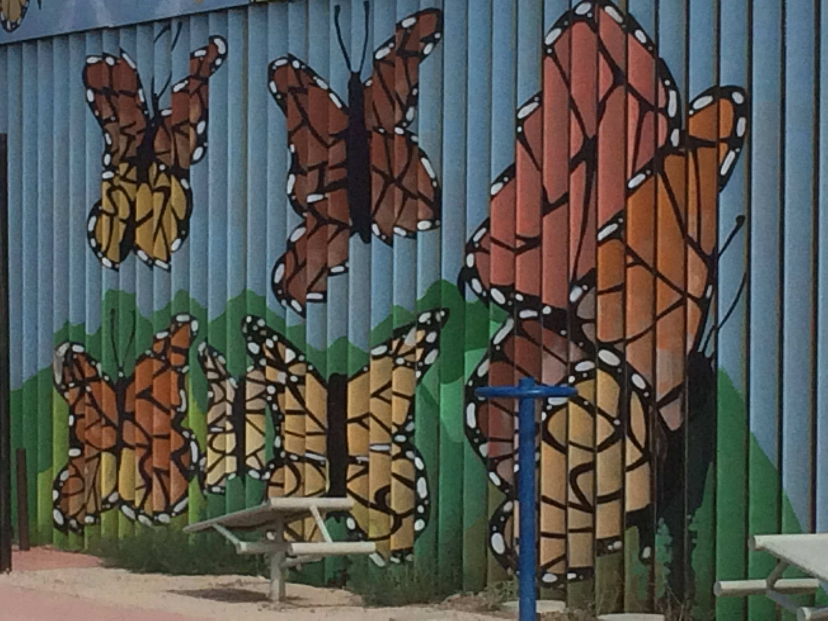 Butterflies-on-the-Wall
