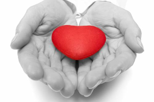 love conception. female hands holding red heart.