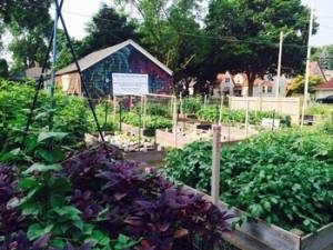 : In 2015, Divine Intervention's Garden Keepers gardens produced 1500 pounds of food for distribution in Milwaukee, Wisconsin.