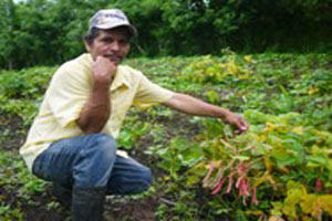 After working with the Council of Protestant Churches of Nicaragua (CEPAD) to irrigate and fertilize his crops, Eduardo grew enough beans to feed his family. (Photo by Audrey White)