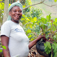 Eveline Demelis, from the mountains of Léogâne, shows off her vegetable tires with beets, chives and tomato seedlings. Eveline and her husband, Esterne, have kept about eight tires in continuous production since early in 2013. January 2016. Photo by Mark Hare.