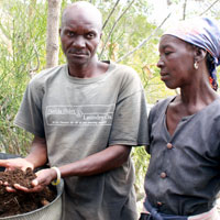 Lechène Alexis and his wife, Aliana Alisme, from the community of Marouj in the municipal section of Bayonnais (Gonaïves), showing us their tires filled with African redworms and redworm compost. January 2016. Photo by Mark Hare.