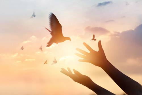 Photo of hands releasing a dove.