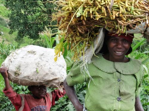 rwandan woman and son harvesting crop