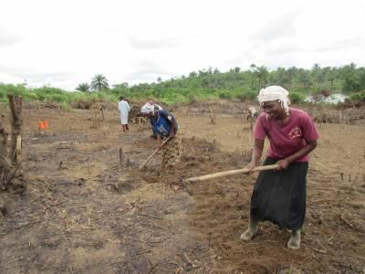 Preparing land for farming in Liberia