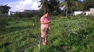 Elder Nani showing us her orange grove