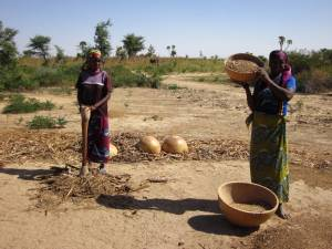 Young women in Niger pounding millet and sifting the grain from the chaff