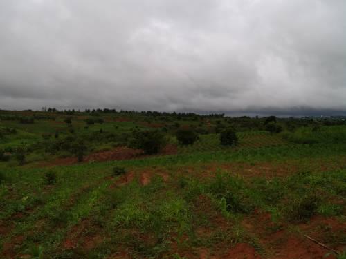 Viyele CCAP Church Women's Guild garden, Mzuzu, Northern Malawi