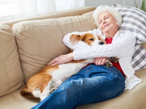 white haired senior woman sleeping on couch hugging her dog enjoying afternoon nap at home