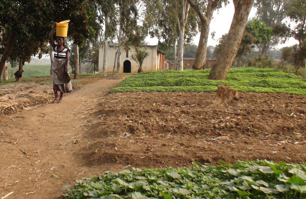 CPC women in Lubumbashi (Katanga) keep kitchen gardens around the Church to raise support for vulnerable children.