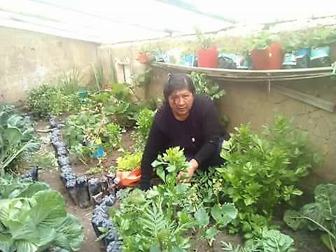 Vicky enjoying growing new life in her family greenhouse, El Alto, Bolivia.