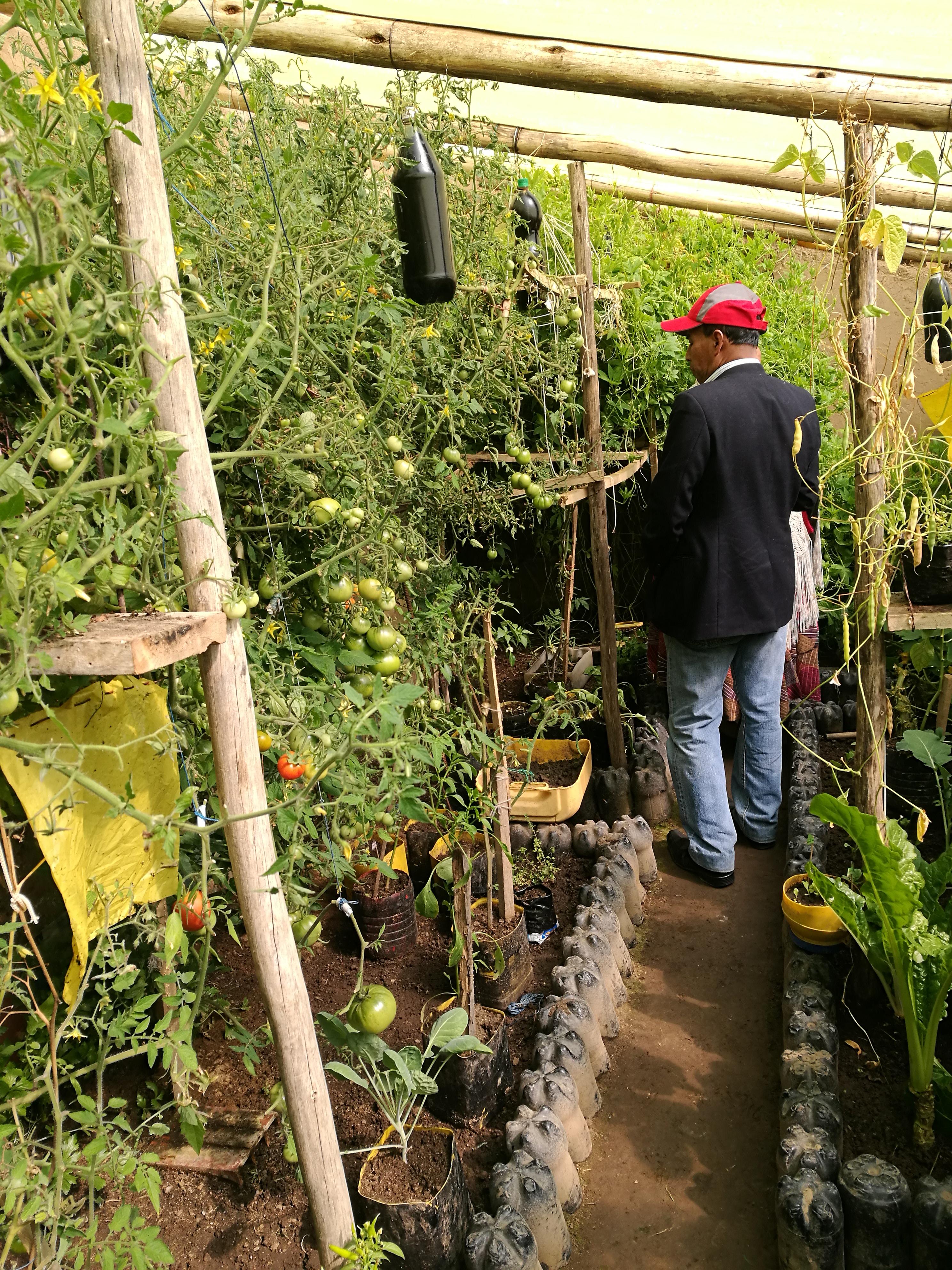 What life abundant looks like in a family greenhouse, El Alto, Bolivia.