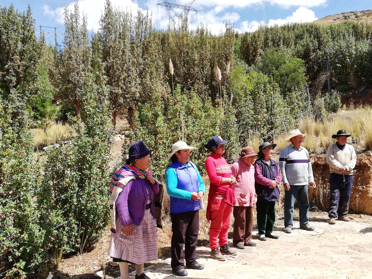 The Committee of the Villa del Sol Reforestation Project, with the successful project results in the background. La Oroya, Peru