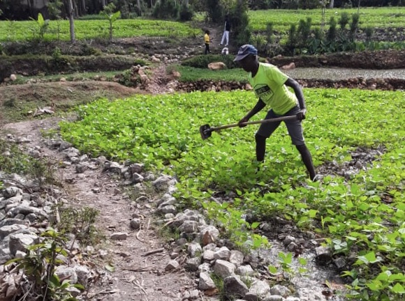 A woman tends a garden in Dofine, Haiti, through a project supported by Presbyterians and directed through FONDAMA. Photo by Herve Delisma.
