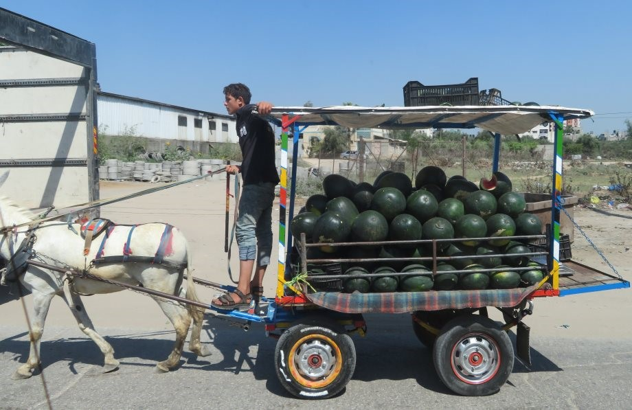 A donkey cart laden with watermelons.