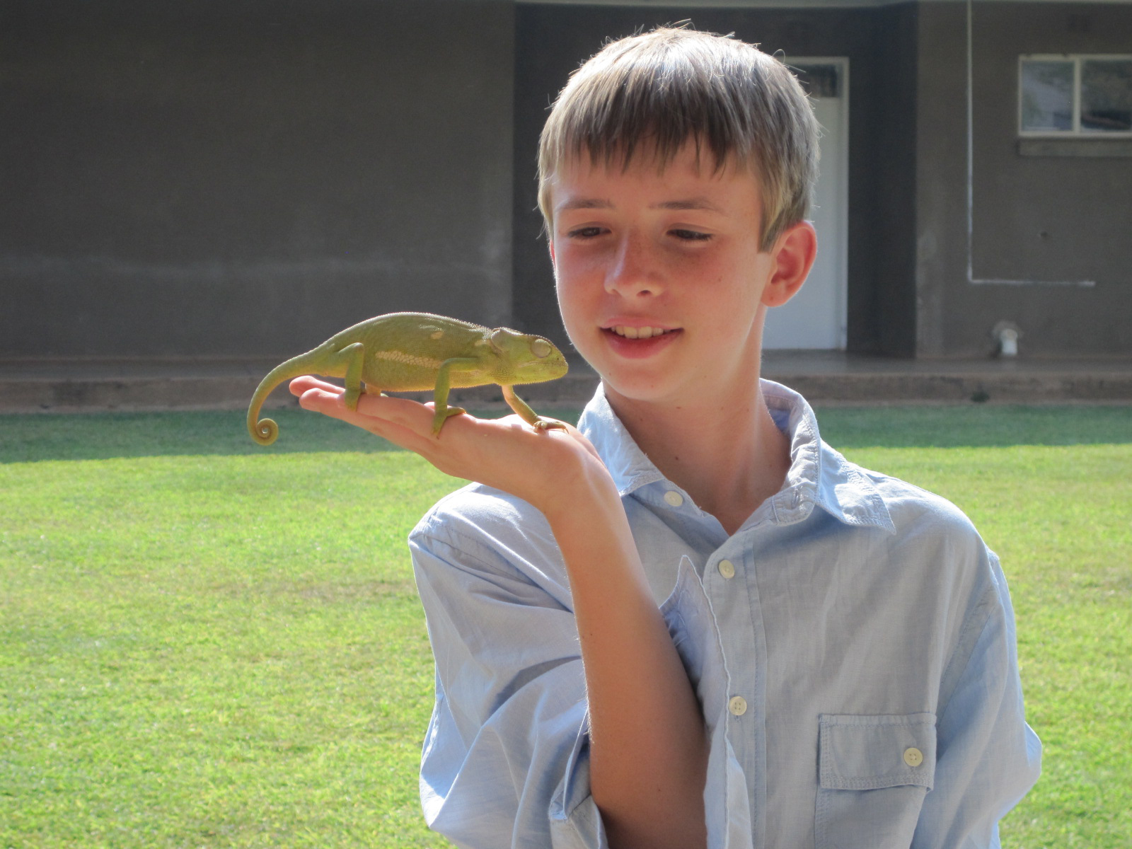 Enjoying nature -- such as chameleons -- while growing up on the Justo Mwale campus in Zambia.