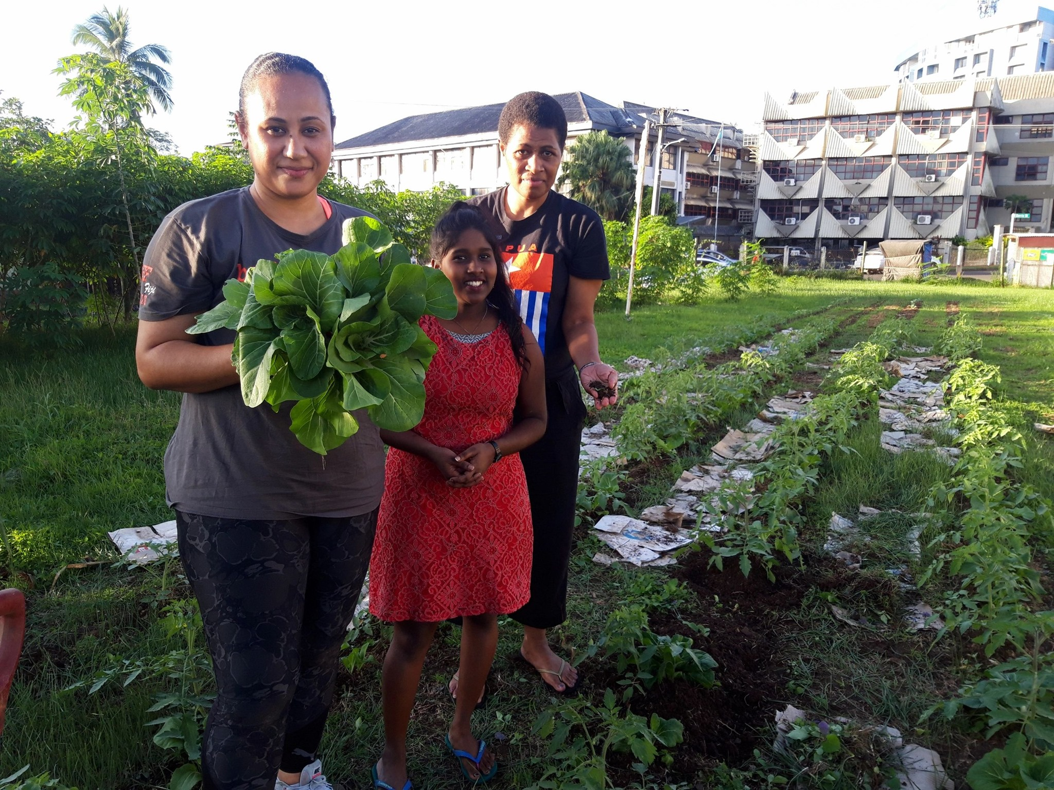 Staff of the Pacific Conference of Churches (PCC), a global partner of PC(USA) in Suva, Fiji, planted a vegetables garden by their headquarters, right in the heart of Suva. It is an act of witness to show care for the Creation and promote food security in time of lockdown. Photo credit PCC.