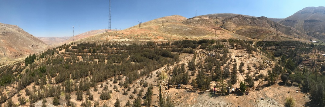 A panoramic view of some of the 30,000 trees planted by Mama Toya and friends in Villa El Sol. Contamination and climate change have left the earth scorched, threatening the life of the trees.