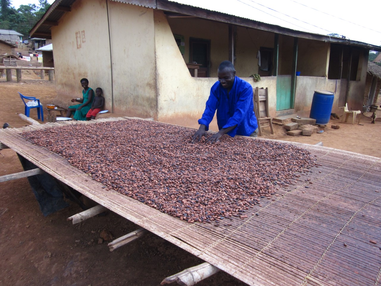 The fermented cocoa seeds drying in the West African sun.