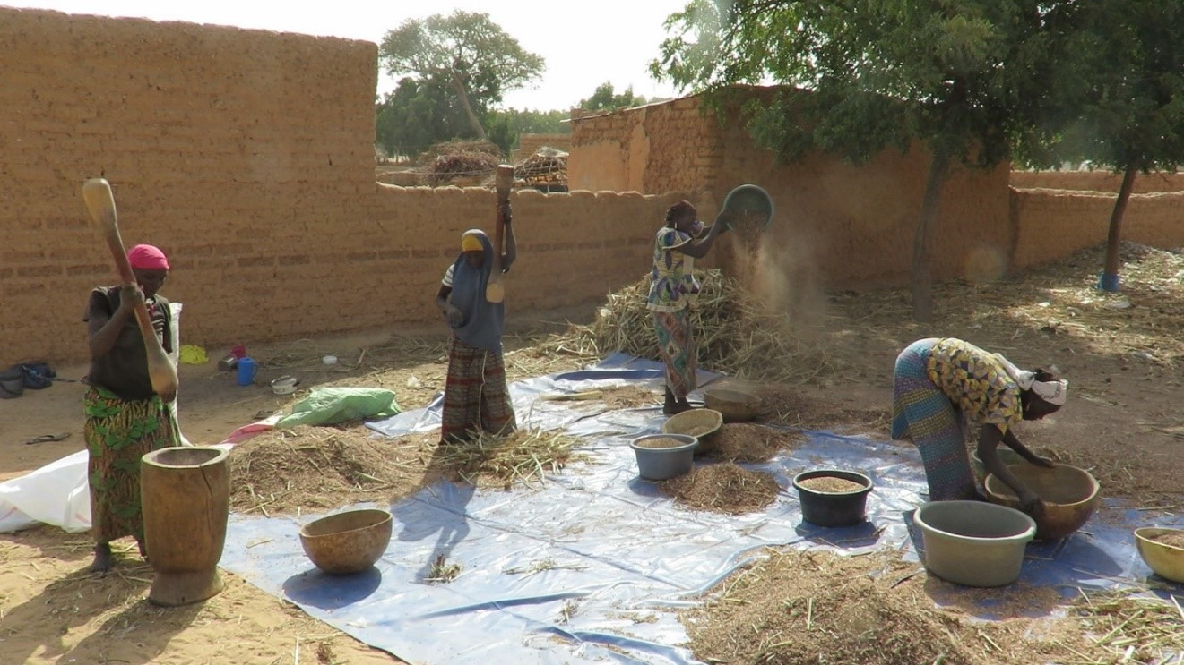 Women in Niger separating grain from chaff. A video of this can be found at youtu.be/HiyeLD9fKps.
