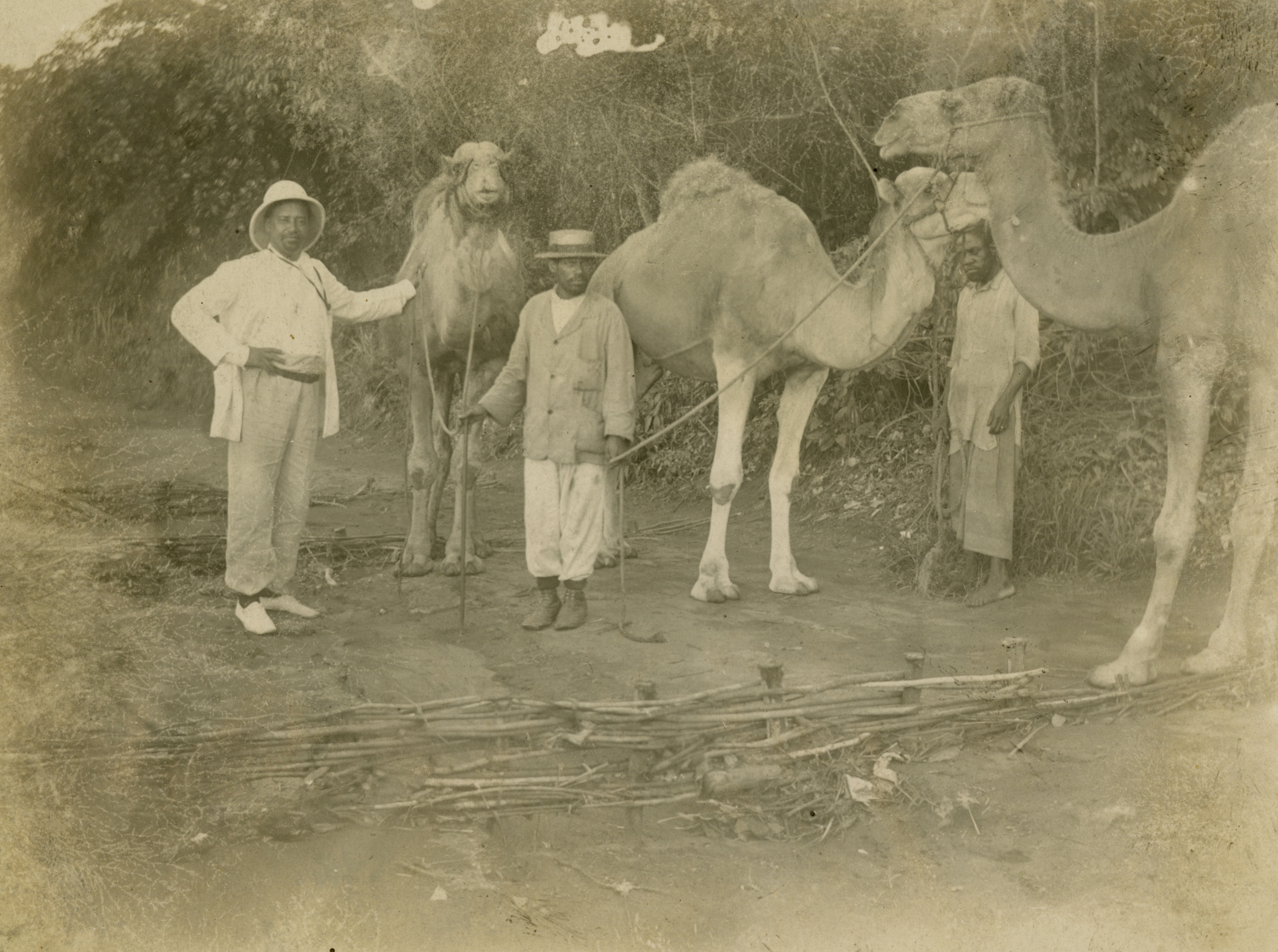 Sheppard, left, with two Congolese men and camels. Photo credit: Presbyterian Historical Society