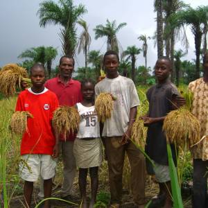 Boys harvesting rice