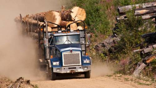 logging truck carrying huge trees