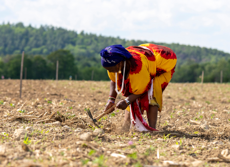 woman with bright Somalian garb cultivating field