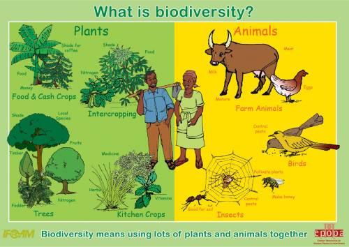 chart explaining biodiversity
