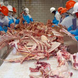 meat processing with bones and meat on big table