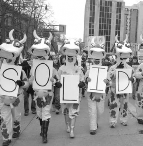 Cow people spell 'solid' with signs