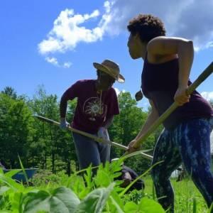 Farmers weeding in NY