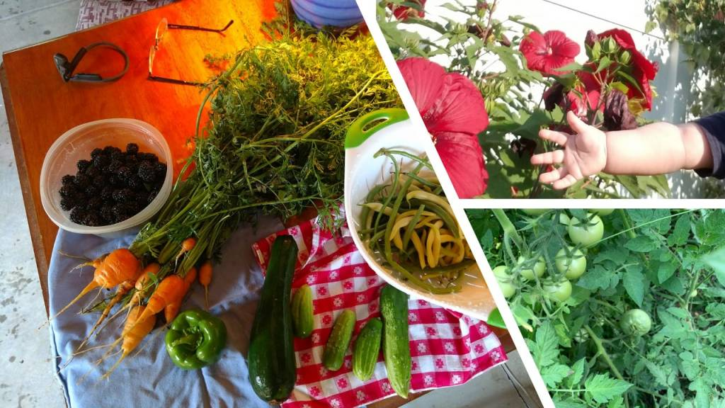 Tomato Plant/Baby Veggies/baby Hand