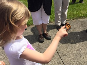 small child with Eastern Monarch on her finger