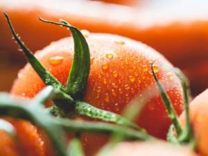 wet-tomato